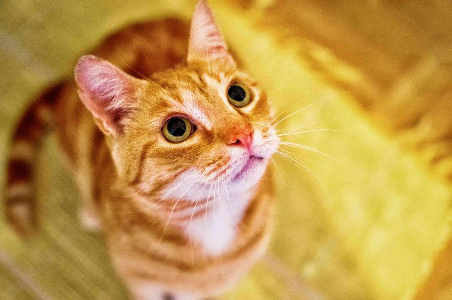 einfangen von wilden katzen