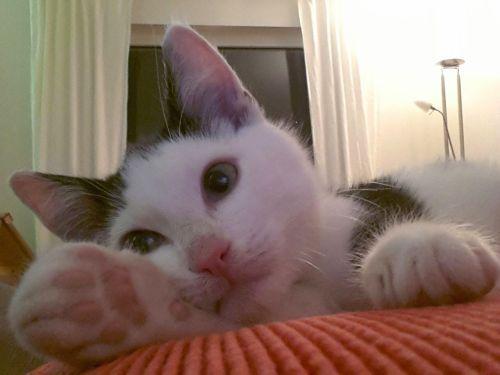 wovon kleine katzenkinder durchfall